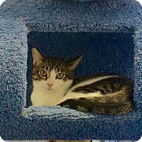 Adopt A Pet :: Izzy (Isadora) - Novato, CA