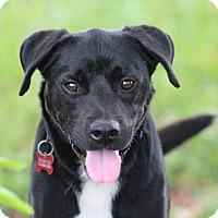Adopt A Pet :: Brinks - Glastonbury, CT