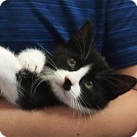 Adopt A Pet :: Cookie - N. Billerica, MA