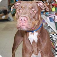 Adopt A Pet :: Nori - Brooklyn, NY