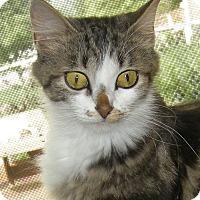 Adopt A Pet :: Annabel - Germantown, MD