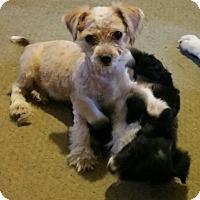 Adopt A Pet :: Jinky - Thousand Oaks, CA