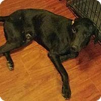Adopt A Pet :: Prince Charming - Crosby, TX