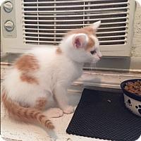 Adopt A Pet :: Rafiki - Ashland, OH