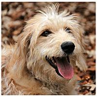 Adopt A Pet :: Luna - Forked River, NJ