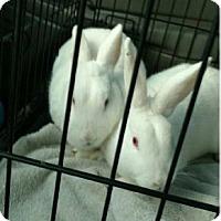 Adopt A Pet :: Elmer - Hillside, IL