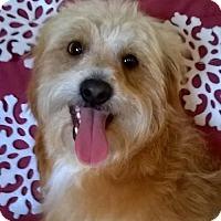 Adopt A Pet :: Kris - Campbell, CA