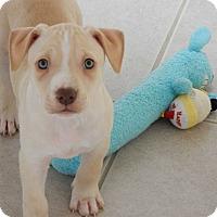 Adopt A Pet :: Aspen - Long Beach, NY