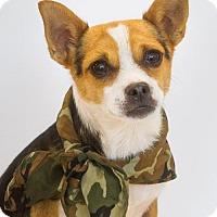 Adopt A Pet :: Buster - Phelan, CA