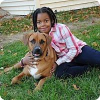 Adopt A Pet :: Waffle (Mimi's pups) - Whitestone, NY