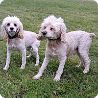 Adopt A Pet :: Shaggy & Curly - Michigan City, IN
