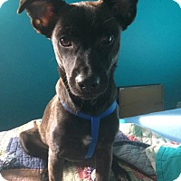 Adopt A Pet :: Matthew (reduced fee) - Harrisonburg, VA