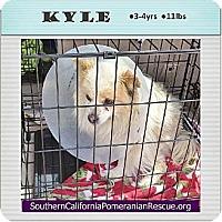 Adopt A Pet :: Kyle - Irvine, CA