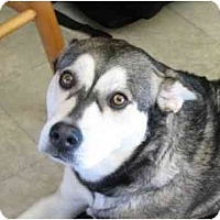 Adopt A Pet :: Bella--Adopted! - Belleville, MI