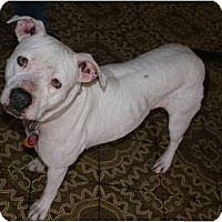 Adopt A Pet :: Nolly - Glenpool, OK