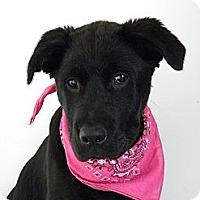 Adopt A Pet :: Jorja - Monteregie, QC
