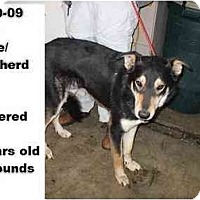 Adopt A Pet :: # 810-09 - RESCUED! - Zanesville, OH