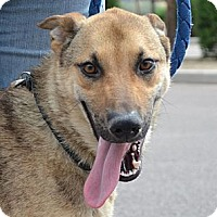 Adopt A Pet :: Mooch - Gilbert, AZ