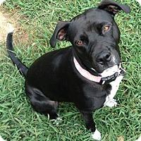 Adopt A Pet :: Echo - Winchester, VA