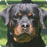 Adopt A Pet :: Heidi - Alachua, GA