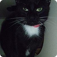 Adopt A Pet :: Lizzie - Hamburg, NY