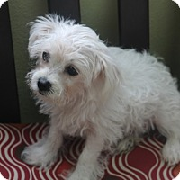 Adopt A Pet :: Asprey - MEET HER IN CT - Norwalk, CT