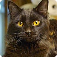 Adopt A Pet :: Elton & Ellie - Medford, MA