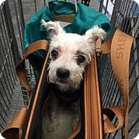 Adopt A Pet :: Lulu! *Adoption Pending!* - New York, NY