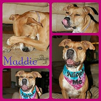 Dalmatian Mix Dog for adoption in Fort Collins, Colorado - MaddieB