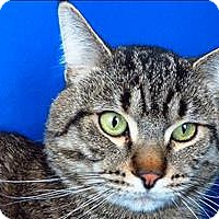 Adopt A Pet :: Hunter - Sherwood, OR