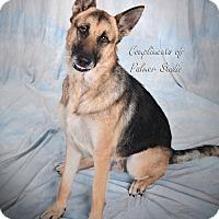 Adopt A Pet :: Gumbo - Middletown, RI