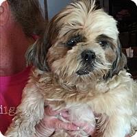 Adopt A Pet :: Liza Jane - Blanchard, OK