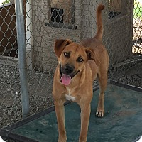 Adopt A Pet :: Liberty - Lewisburg, TN
