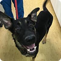Adopt A Pet :: Rocko - Littleton, CO