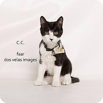 Domestic Shorthair Kitten for adoption in Riverside, California - CC