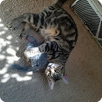 Adopt A Pet :: Grasshopper - Stafford, VA