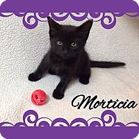 Adopt A Pet :: Morticia - Buffalo, IN