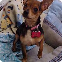 Adopt A Pet :: Smokey Joe- 6 lbs - Dahlgren, VA