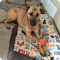 Adopt A Pet :: Jude aka Shadow - Cedar Rapids, IA