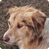 Adopt A Pet :: Holly - Maynardville, TN