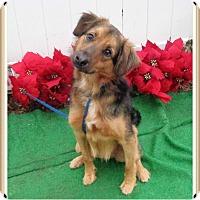 Adopt A Pet :: ZORRO - Marietta, GA