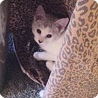 Adopt A Pet :: Kenai - Eureka, CA
