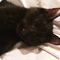Adopt A Pet :: Scarlett - Colfax, IA