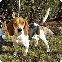 Adopt A Pet :: Magic - St John, IN