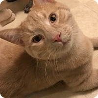 Adopt A Pet :: Avery - Cleveland, OH