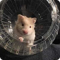 Adopt A Pet :: Crunch - St. Paul, MN