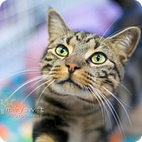 Adopt A Pet :: Hardford - Reisterstown, MD