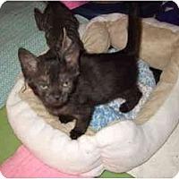 Adopt A Pet :: Naomi - Fort Lauderdale, FL