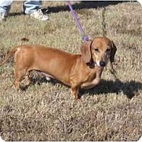 Adopt A Pet :: Jack - Glastonbury, CT