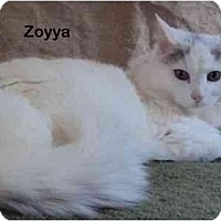 Adopt A Pet :: Zoyya - Portland, OR